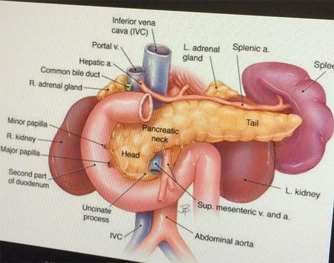 pancreas-diagram-feat