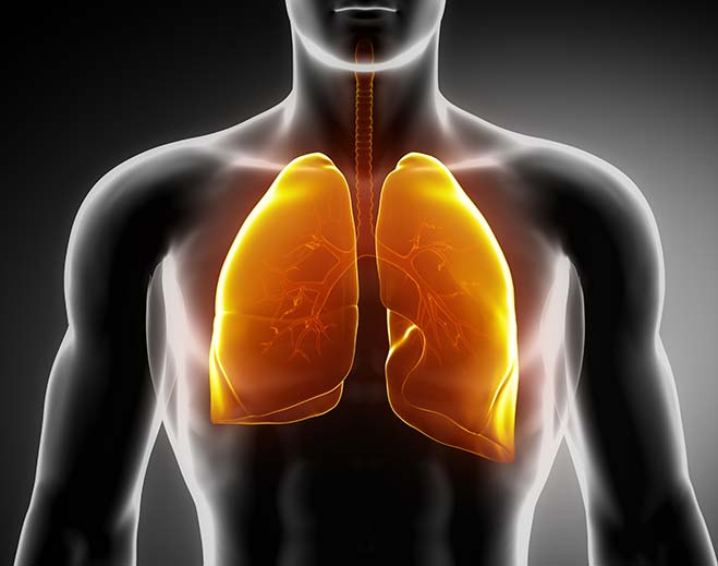 respiratory-lungs-feat